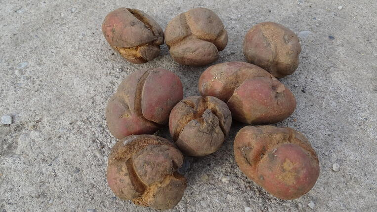 Effects on tuber disorders