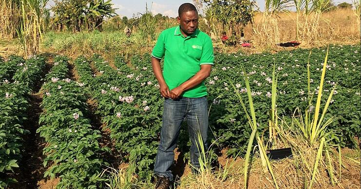 In low-tech agricultural settings, farmers by definition apply precision farming in time and space with hand labour only.