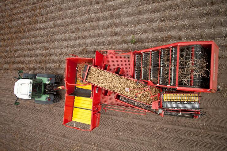 A fully automatic harvesting machine deposits the tubers in an accompanying vehicle or a bunker.