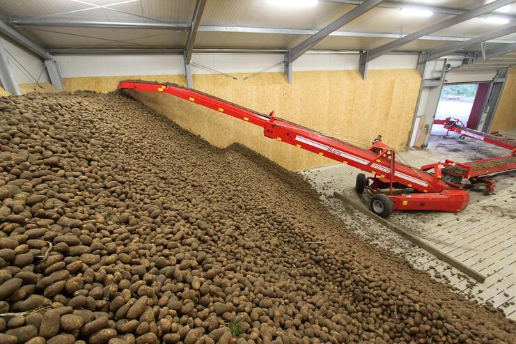 an elevator belt (the piler or store loader) delivers the tubers to a belt that fills the storage compartment or boxes.