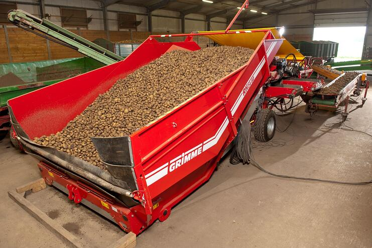 The truck that goes between harvesting machine and store delivers the tubers to a hopper.