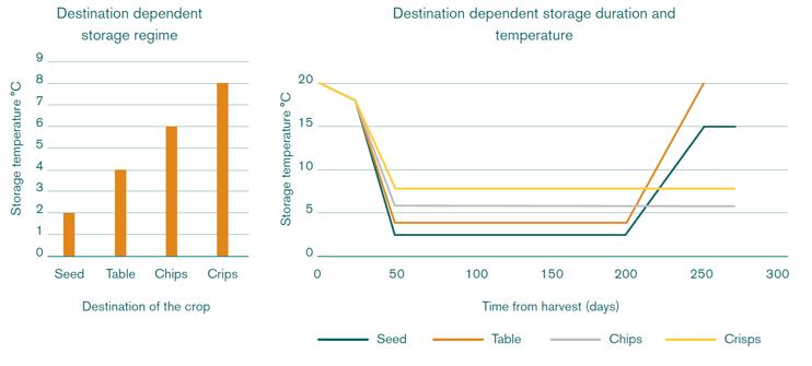 Destination dependent potato storage regime, duration and temperature