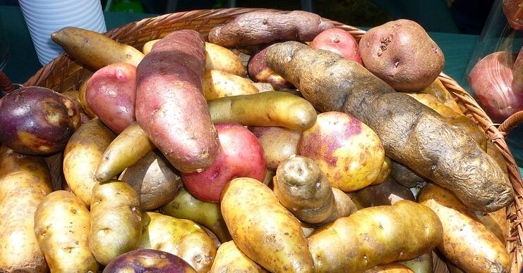 There is great multiformity in tuber properties of fresh potatoes
