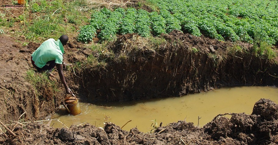 Watering by can is labor intensive. It allows precision farming: only apply where and when needed